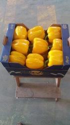 Предлагаем оптовые поставки перцев из Испании