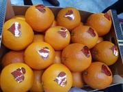 Предлагаем оптовые поставки свежих апельсинов из Испании
