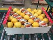 Предлагаем оптовые поставки лимонов из Испании