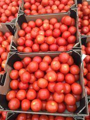 Предлагаем оптовые потавки томатов из Испании
